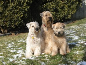 Piper, Willow and flor outside 5