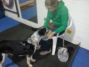 Each dog works at his own station, remaining below threshold and eating treats while people and other dogs move around the room.  We can tell when a dog has had enough for one night or when he is ready for a bigger challenge all by how he is taking his treats!