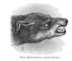 darwin dog 2