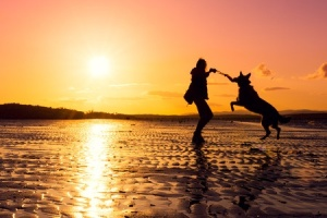 Talking to my dogs has led to a deeper understanding of one another.  Don't go silent.  Discuss.  Deepen.  Connect.  And don't forget to play a little every day!  Copyright:  / 123RF Stock Photo
