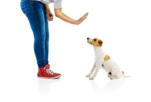 Stay is a stationary behaviour, so I don't use my dog's name when I am teaching him or asking him to stay.  Using your dog's name when asking him to stay is like telling him to stop-go.  Copyright: halfpoint / 123RF Stock Photo