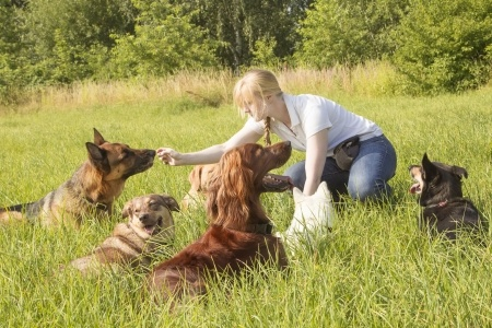If you want to be a professional dog trainer, likely an image such as this comes to mind; playing with a group of well behaved dogs all day long while you earn a living. That may happen, but that is only one tiny aspect of the dog industry. Most of us have to have impeccable people skills. Copyright: mezzotint123rf / 123RF Stock Photo