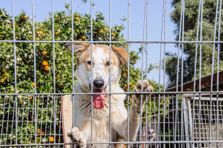 30721738 - closeup of a dog looking through the bars of a fance, outdoor