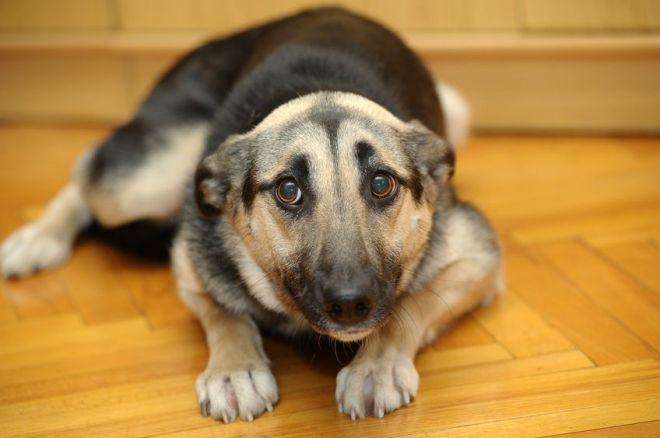 17167398 - cute dog