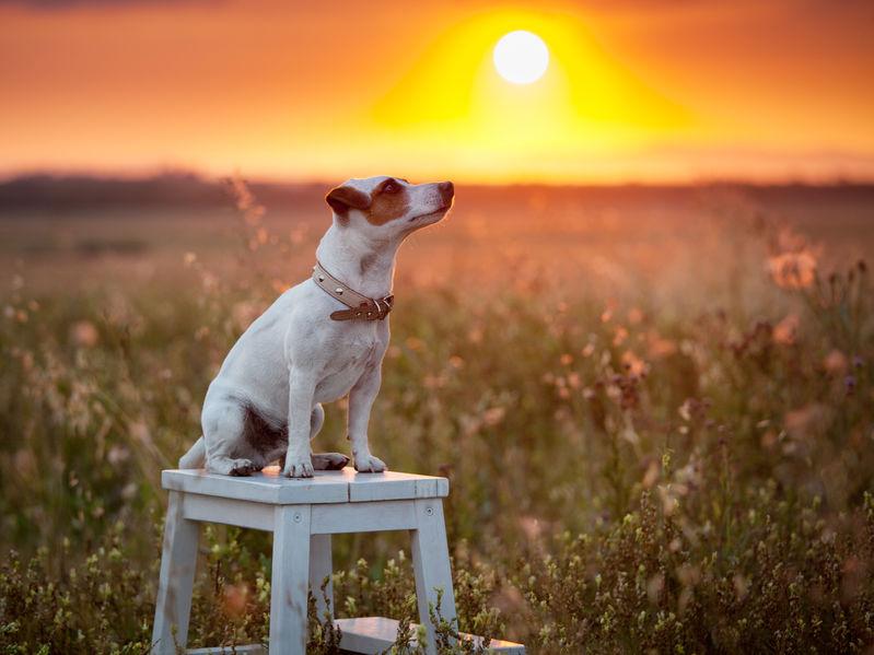 Dog at summer