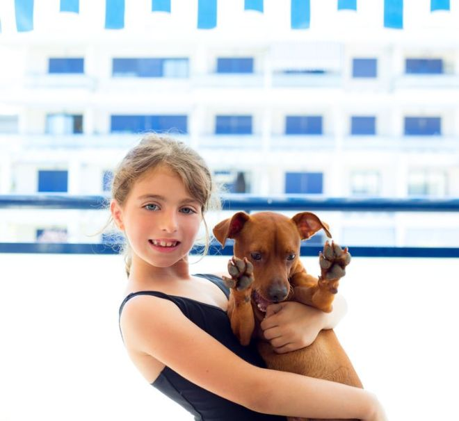 15429363 - brunette kid girl with summer swimsuit playing with dog in apartment