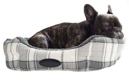 French bulldog sleep in bed