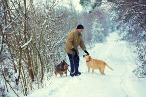 A man with two dogs walks in the woods in winter