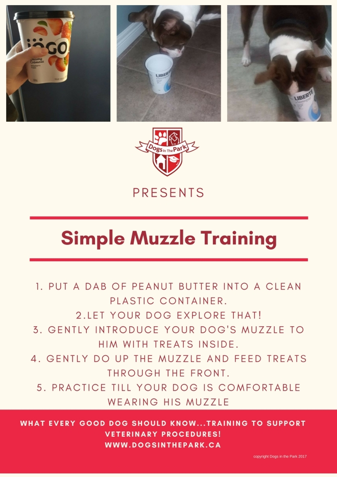 simple muzzle training