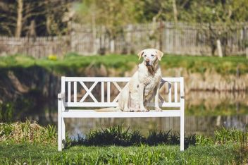 Dog on the woodem bench